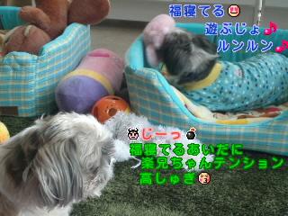 moblog_634c0197.jpg