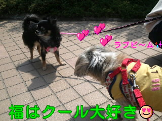 moblog_a53932ec.jpg