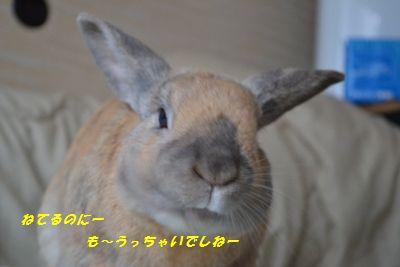 002_20130314125811.jpg