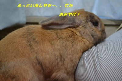 004_20130317124321.jpg