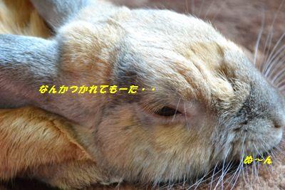 006_20130512100249.jpg