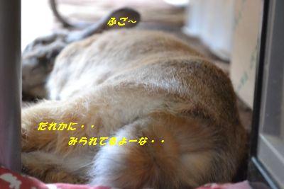 011_20130518103514.jpg