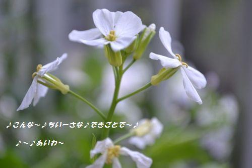 018_20130330184835.jpg