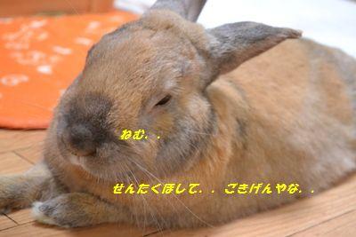 029_20130326194725.jpg