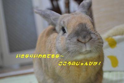 031_20130330184913.jpg