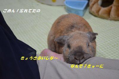 035_20130330184905.jpg