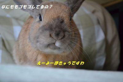 036_20130406130225.jpg