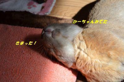 047_20130424122621.jpg