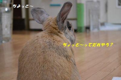 051_20130427162023.jpg