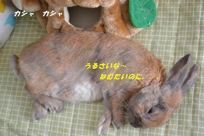 054_20130402130830.jpg