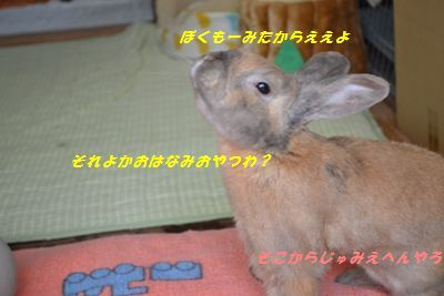 057_20130326194804.jpg