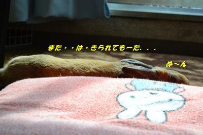 081_20130427161937.jpg