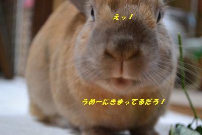 096_20130508110122.jpg