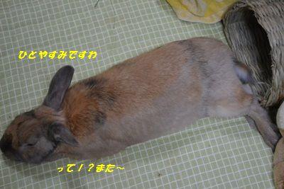 107_20130504142059.jpg