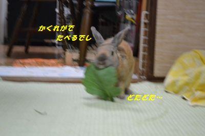 126_20130414130911.jpg
