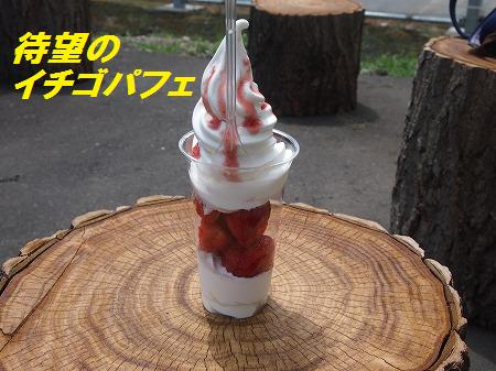 P7073079.jpg