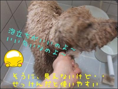 -1_20120428211300.jpg