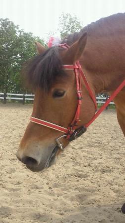 20130527木曽馬