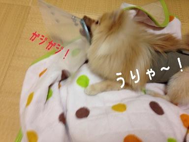 IMG_3487[1]