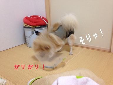 IMG_3488[1]