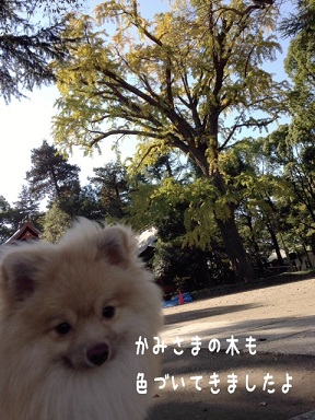 20141119180708b6a.jpg