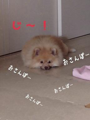 IMG_3662[1]