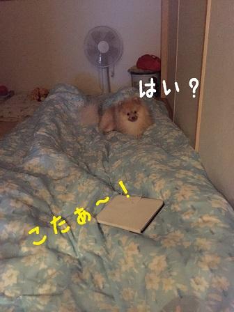 IMG_0214[1]