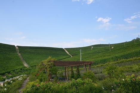 STK 3442 - バルバレスコのワイナリー(TENUTE CISA ASINARI DEI MARCHESI DI GRESY)