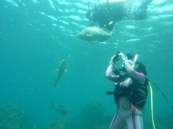 はまふえふき鯛の撮影会