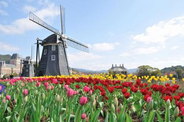 windmill_tulips.jpg