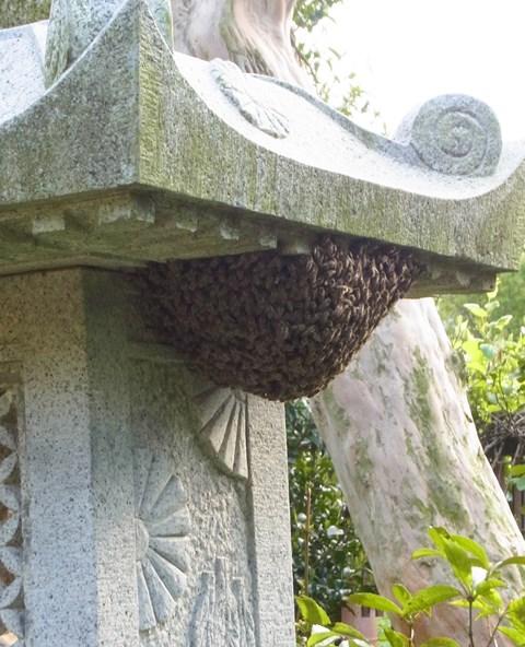 201304 ミツバチ 分蜂2
