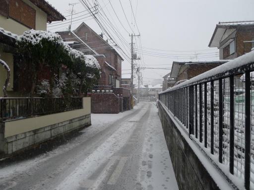 20120229・雪だ12