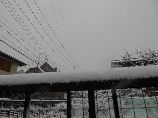 20120229・雪だ11