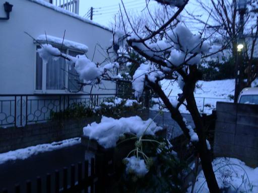 20120229・雪だ14