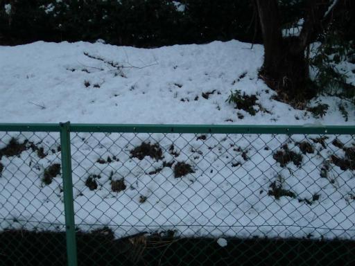 20120229・雪だ15