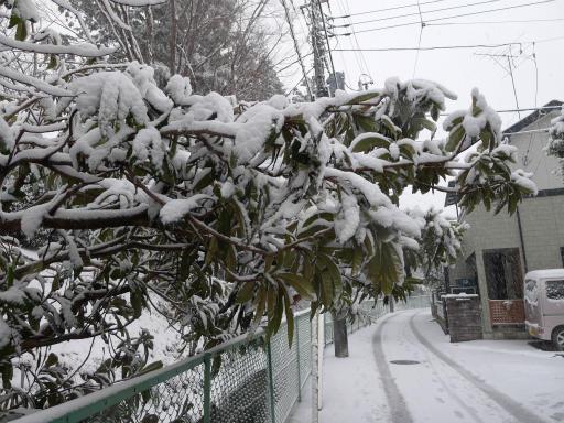 20120229・雪だ13
