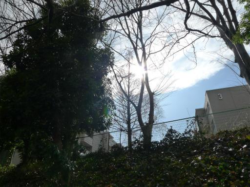 20120324・昼の陽射し1-04