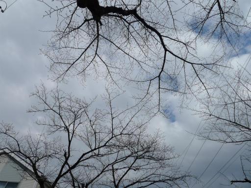 20120324・昼の陽射し空05