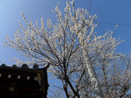 20120324・昼の陽射し空11・来迎寺