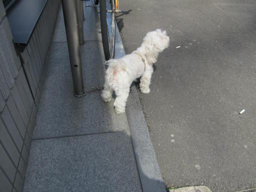 20120326・東京散歩3-06