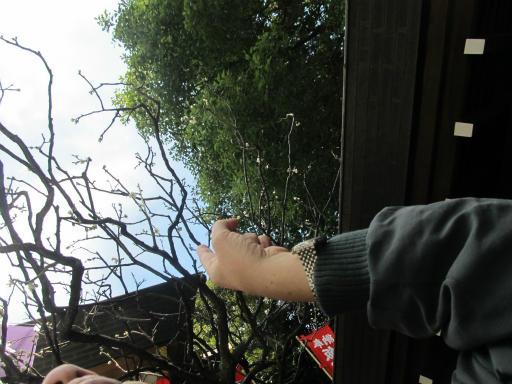 20120326・東京散歩4-18