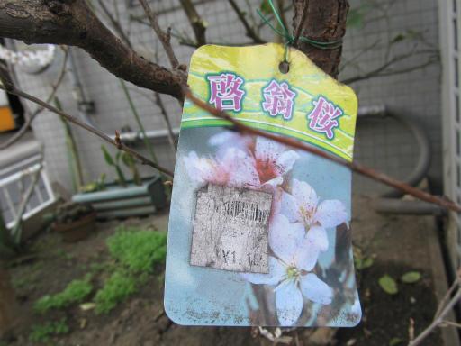 20120326・東京散歩8-04