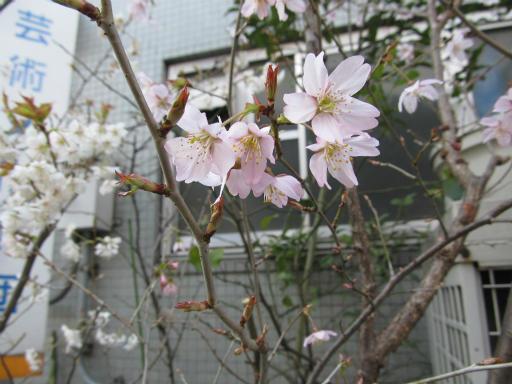 20120326・東京散歩8-03