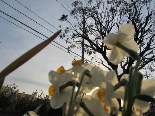 20120330・悲しいほど今日の夕陽きれいだね1