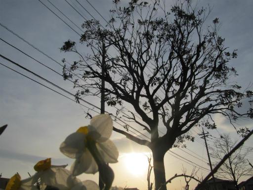 20120330・悲しいほど今日の夕陽きれいだね2
