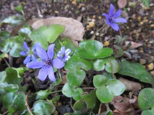 20120401・春の花10