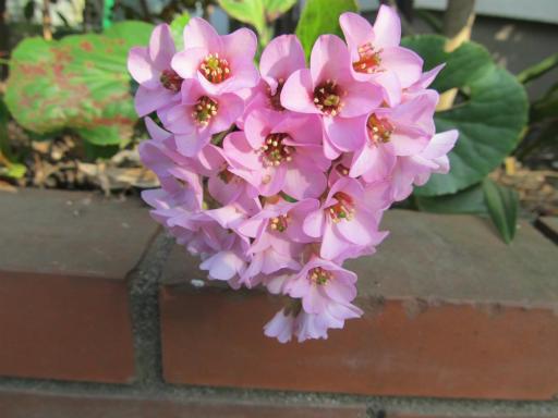 20120401・春の花18