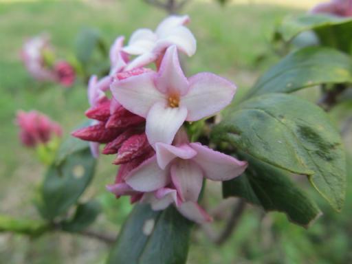 20120401・春の花19