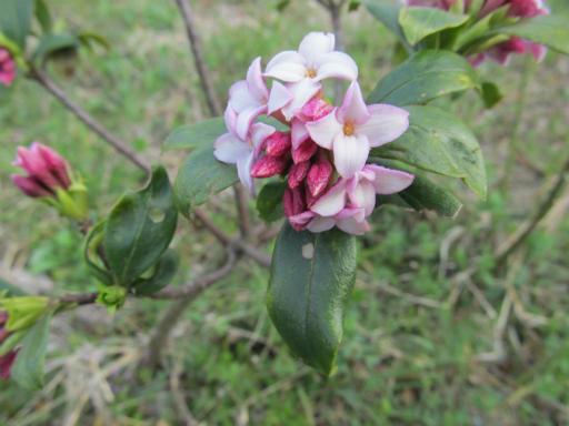 20120401・春の花20