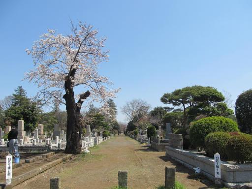 20120408・多磨霊園06